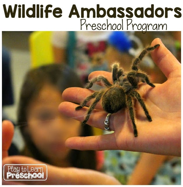 Wildlife Ambassadors Preschool Program